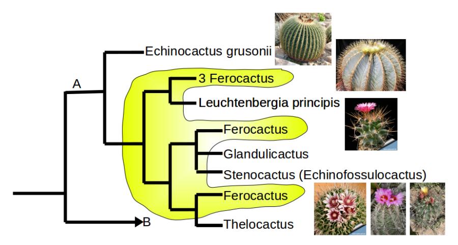 Ferocactus i similars